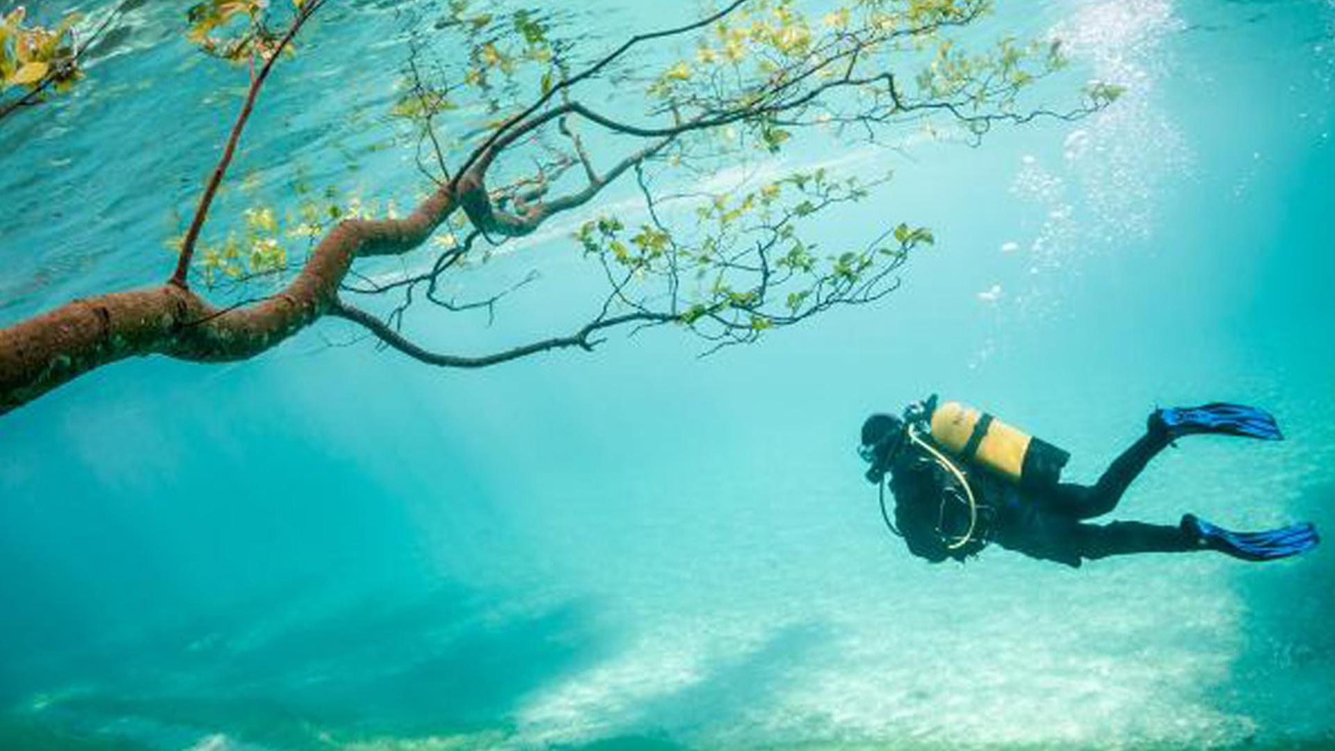 ประกาศสมาคมกีฬาดำน้ำแห่งประเทศไทย ปี 2564